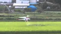 "RC Helicopter ""The most effective pesticides sprayer for rice plants"""