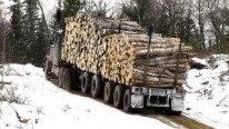 1985 Peterbilt 359 Classic Logging Truck with Huge Load of Logs