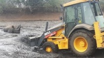 Backhoe Rescues Rhino That's Stuck in Mud