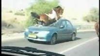 Horse Smashes Through a Car MUST SEE!!!