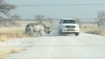 Bone-Chilling Footage - Angry Rhino Attacks SUV Full of Tourist, Scaring the Hell Out of Them