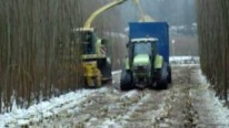 Monster-Like Krone BIG X 500 Self-Propelled Forage Harvester in Action