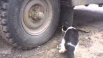 The Real Life Tom and Jerry: Naughty Mouse Tries to Hide from The Sly Cat