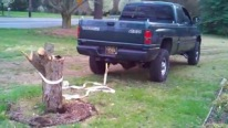 Beast-Like Vehicles Vs Tree Roots: Who Will Win???