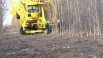 Whole Tree Harvester Devours the Entire Forest in Just Seconds!