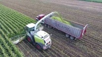 Agriculture at its Best: Harvester Fills the Huge Trailer in Only 4 Minutes!
